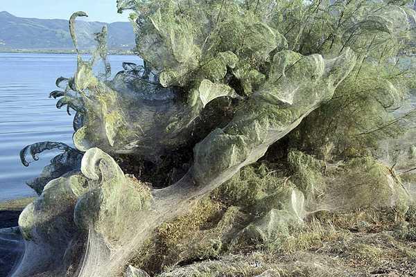 seaspiderweb1